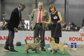 cain terrier-vainqueurs