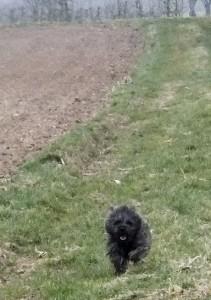 education cairn terrier