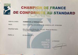 cairn terrier champion de france