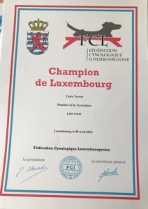 cairn terrier champion du Luxembourg