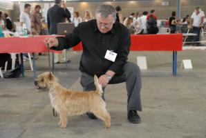 Doggy et son maître