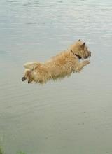 Il saute !