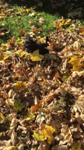 Géniales les feuilles