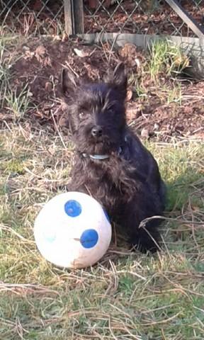 Miky et le ballon