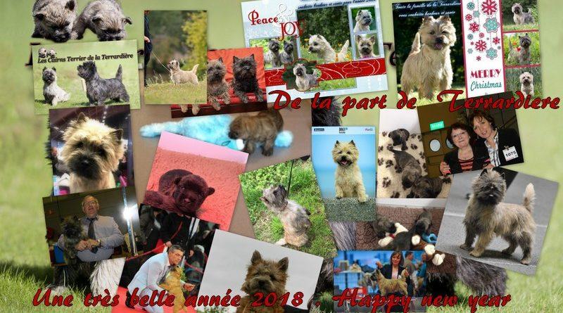 cairn terrier nouvelle année