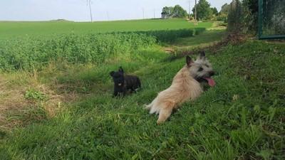 Ensemble dans les champs
