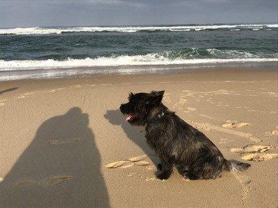 Euh, un peu grosses les vagues...