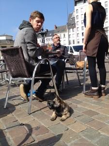 Un Cairn Terrier en terrasse