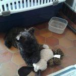 Murphy de la terrardiere