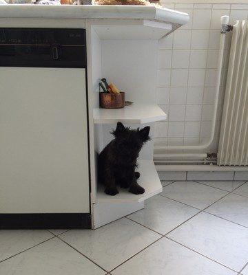 Maman vient de laver