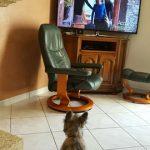 il y a un cairn terrier