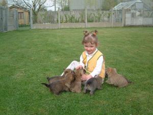 eveil chiot cairn terrier