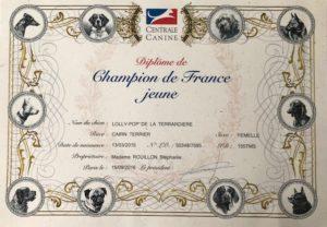 cairn terrier championne de France jeune