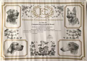 cairn terrier champion international