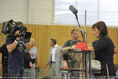 cairn terrier au championnat de france