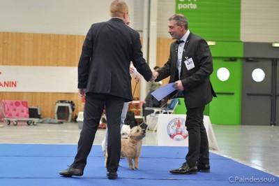 Nefertiti Meilleur Terrier d'ecosse