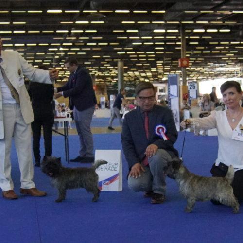 cairn terrier BOB BOS championnat de france (2)