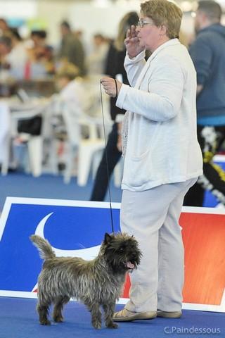 cairn terrier championnat de france nixon (5)