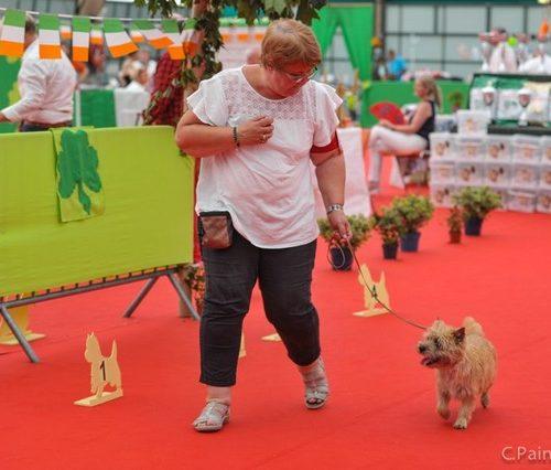 cairn terrier little girl (2)_tn